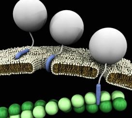 Péptidos penetrantes de células